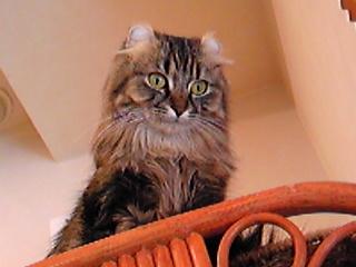 猫の瞳のえり好み